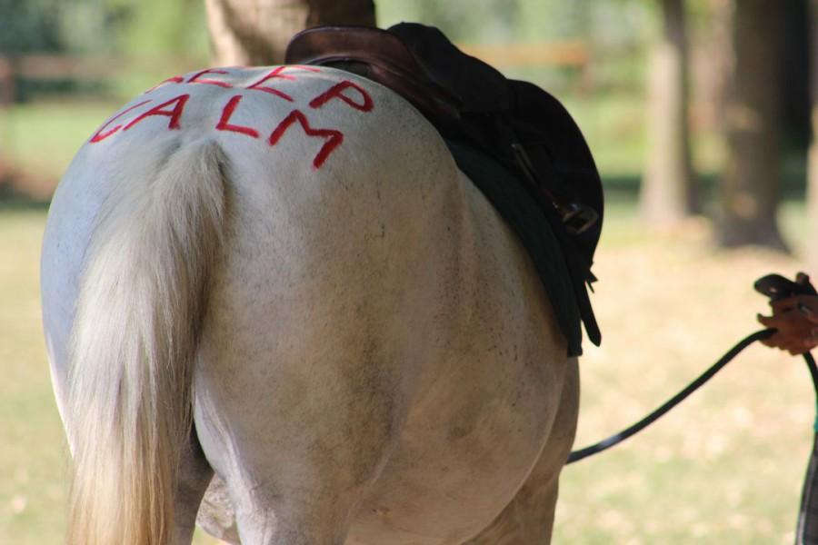 Equitando 2016: i campi estivi di Gente di Cavalli