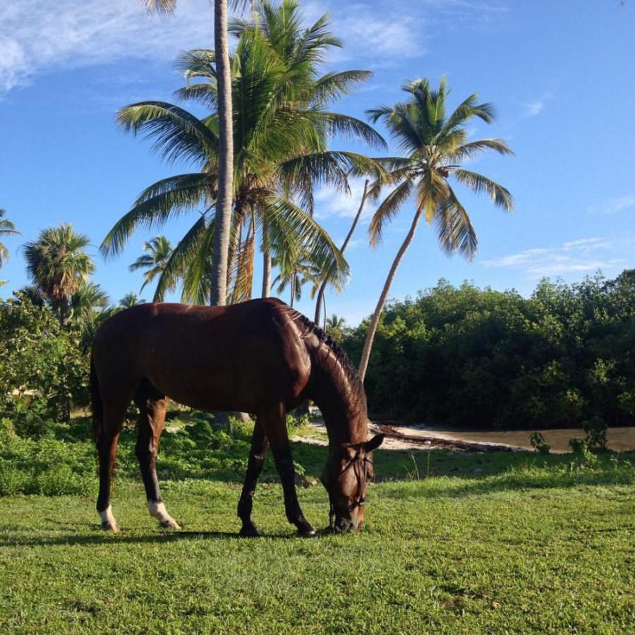 Uno Stage da Sogno! Gente di Cavalli a Santo Domingo